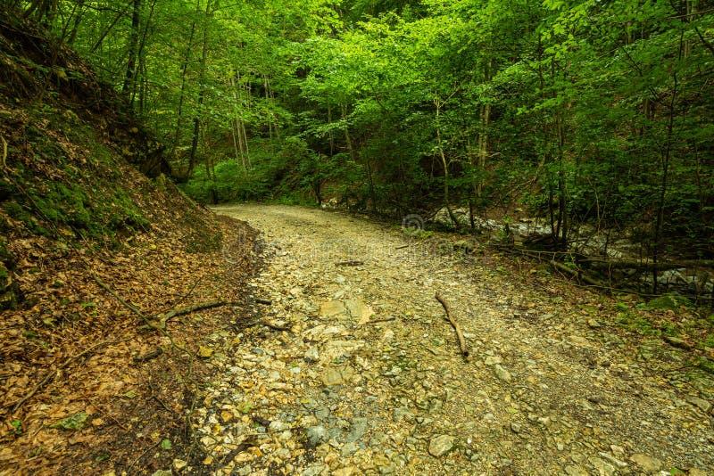 Halna droga przez zielonego lasu zdjęcie stock