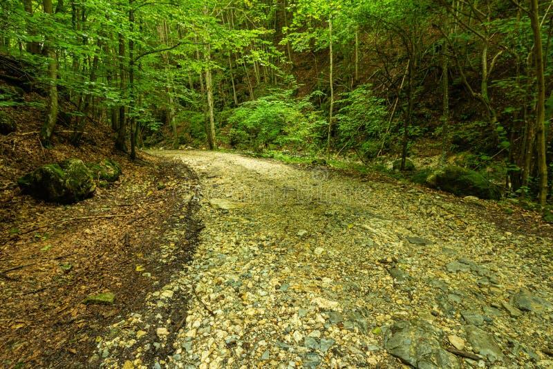 Halna droga przez zielonego lasu zdjęcia royalty free