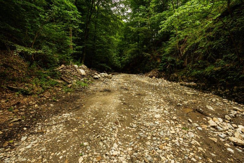Halna droga przez zielonego lasu obrazy royalty free