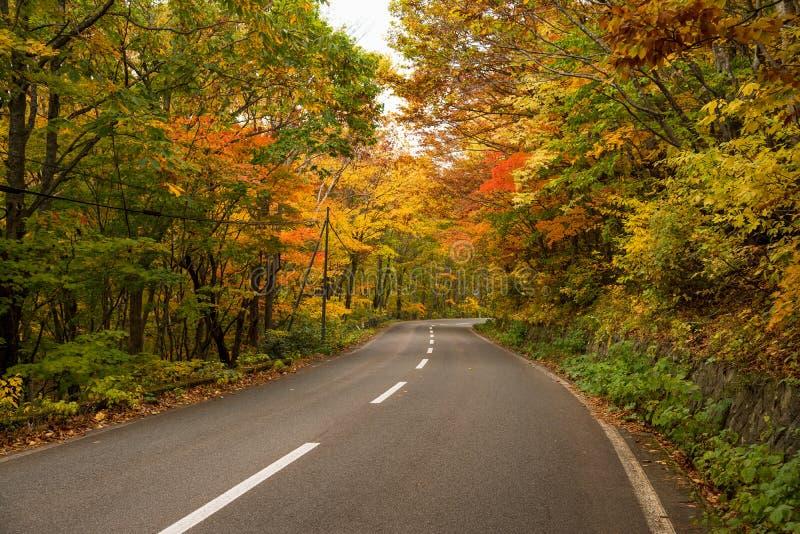 Halna droga przy Hachimantai terenem w jesień sezonie obraz royalty free