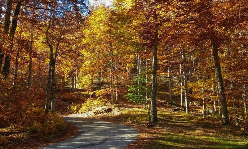 Halna droga w cudownym jesiennym lesie zdjęcia stock