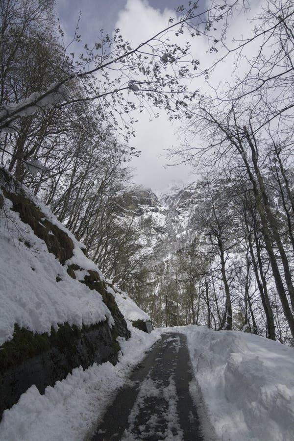 Halna droga w Szwajcarskim lesie obrazy stock