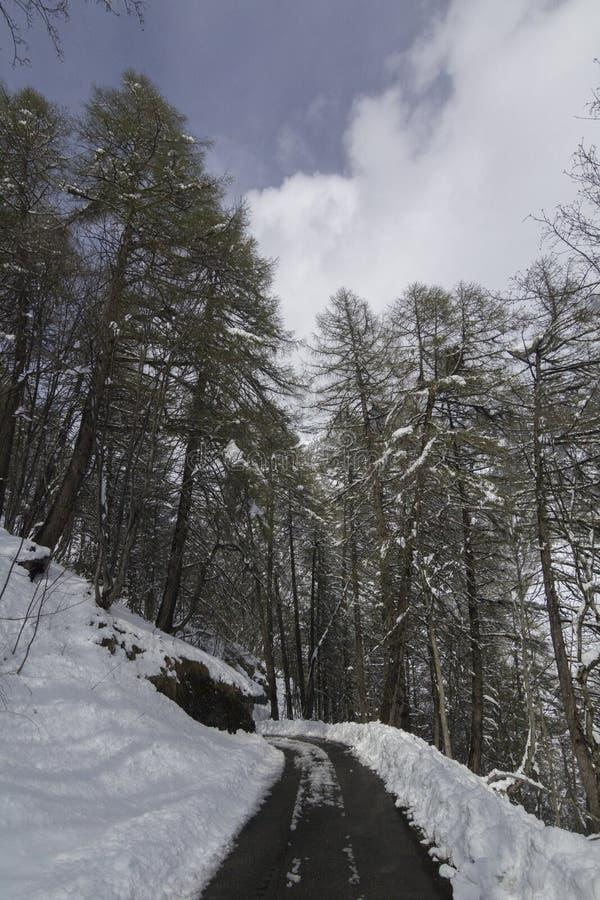 Halna droga w Szwajcarskim lesie obrazy royalty free