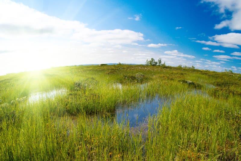 halna północna tundra zdjęcia stock
