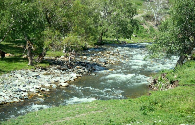 Halna rzeka płynie w lesie pod tendencyjnością zdjęcie stock