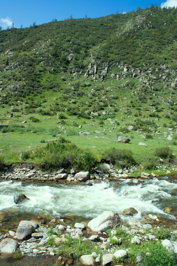 Halna rzeka płynie w lesie pod tendencyjnością zdjęcie royalty free