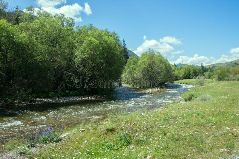 Halna rzeka płynie w lesie pod tendencyjnością obraz stock