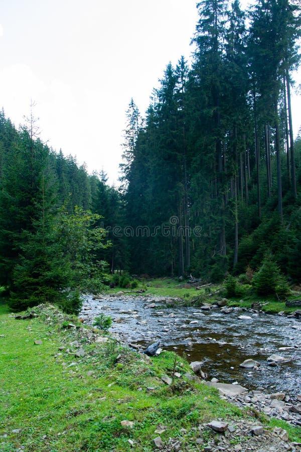 Halna rzeka płynie w obszarze zalesionym zdjęcia royalty free