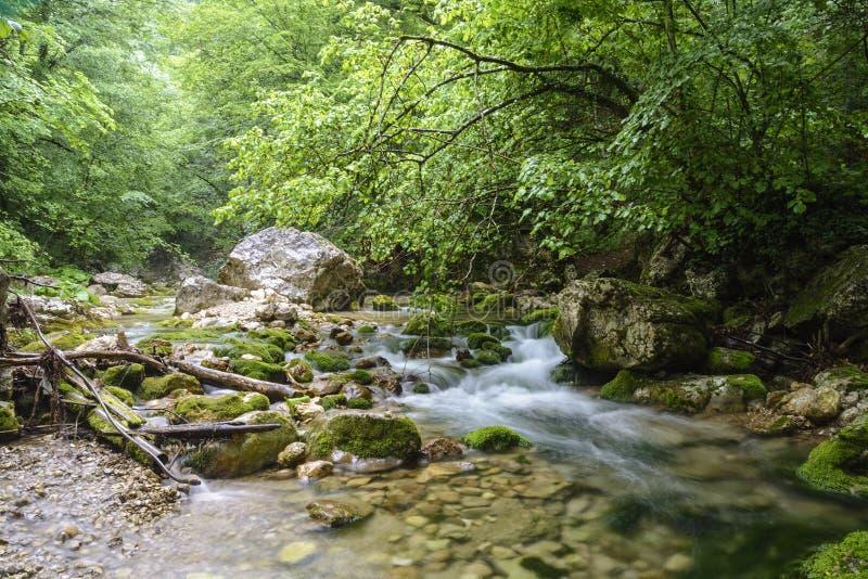 Halna rzeka w lasowym i halnym terenie, Uroczysty jar, Crimea fotografia stock