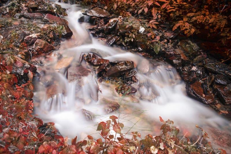 Halna rzeka z kaskadami i siklawy spływanie w himalajach w jesieni Lasowa zatoczka z Czystą Przejrzystą wodą obraz royalty free