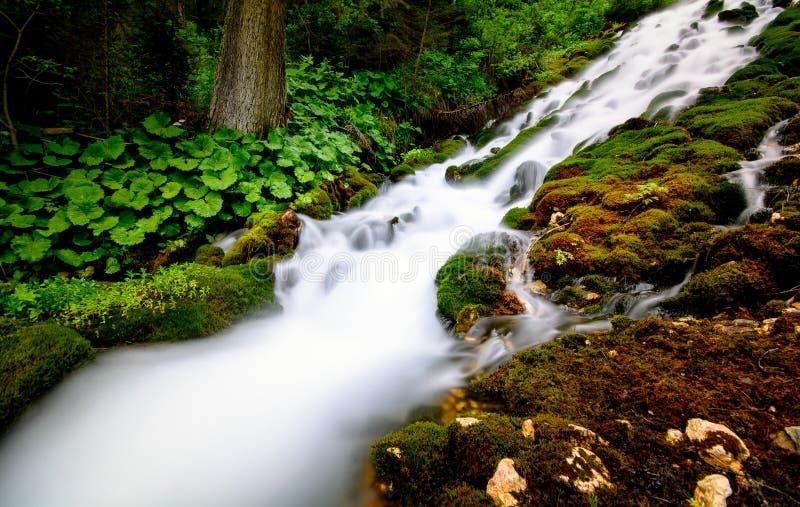 Halna siklawa z czystą wodą i zieleni roślinnością zdjęcie royalty free