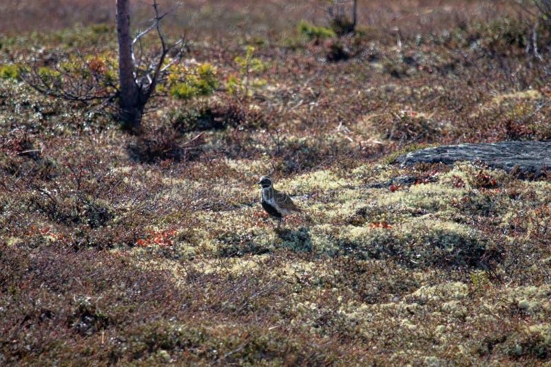 Halna tundra w Lapland zdjęcia royalty free