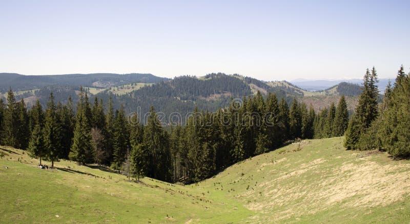 Halna wycieczka w Vatra Dornei, Rumunia obraz royalty free