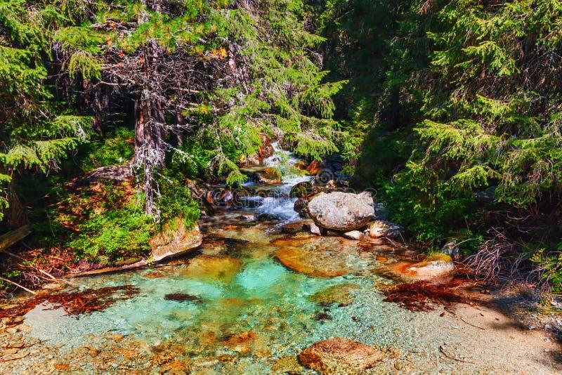 Halna zatoczka z kryształem - jasna woda w lasu i słońca jaśnieniu przez drzew fotografia stock
