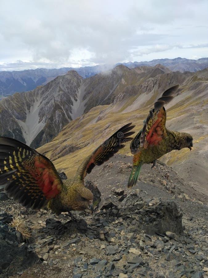 Halne papugi zdjęcia stock