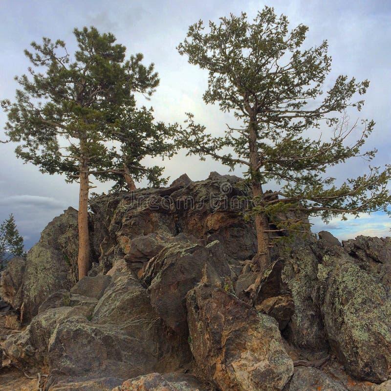 Halni drzewa obraz stock
