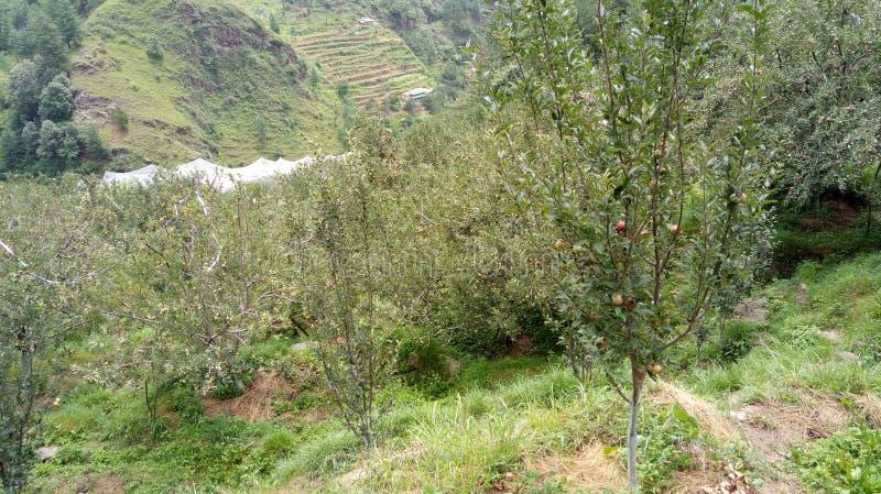 Halni jabłka Shimla obrazy royalty free