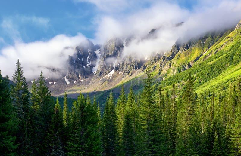 Halni szczyty okrywają w gęstej mgle Lato ranek w Syberyjskich górach fotografia stock