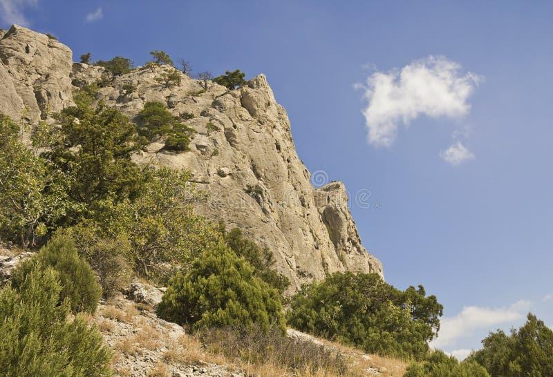 Halni szczyty, przerastający z sosnami i jałowem obraz stock
