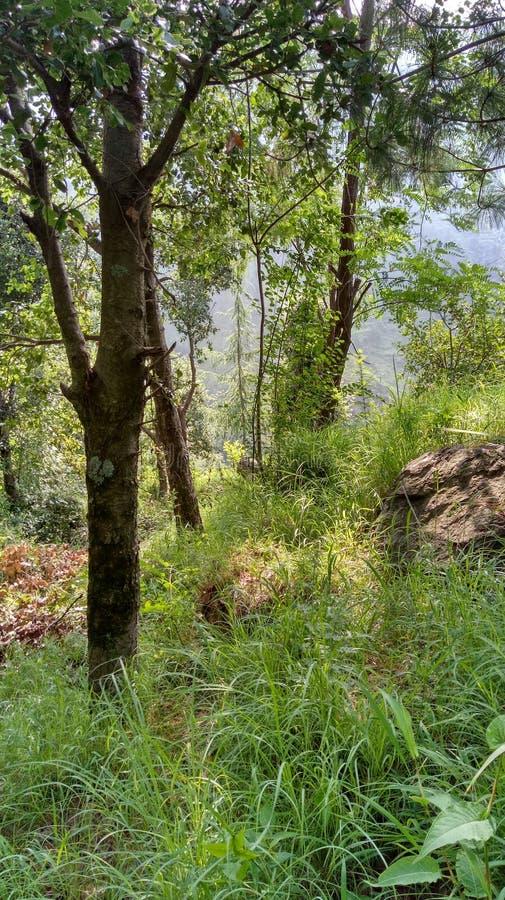 Halny apple& x27; s krajobrazu widoki zdjęcia stock