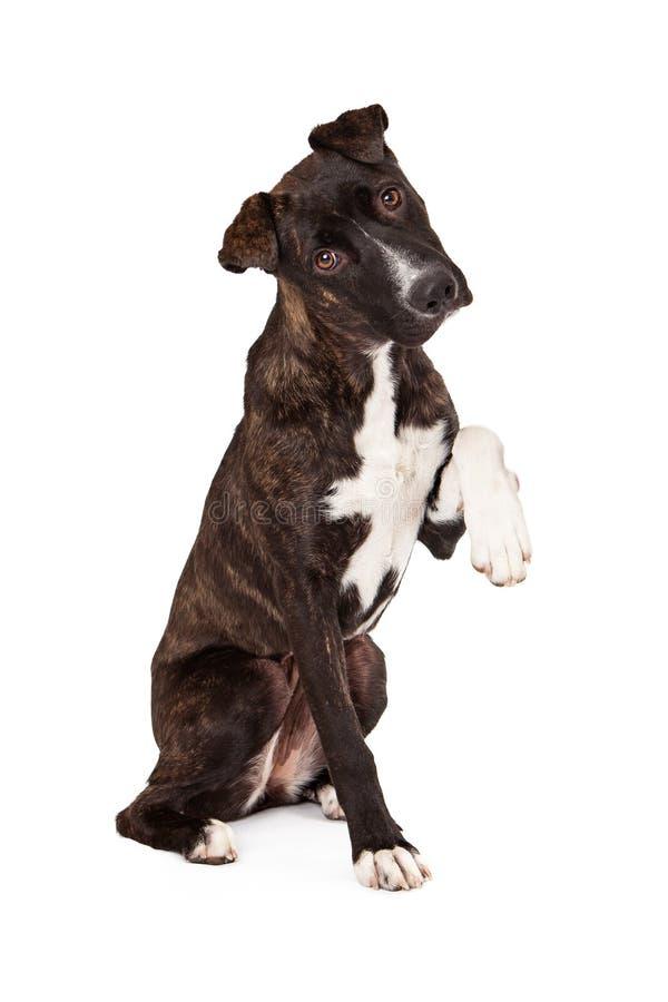 Halny Cur pies z łapą Up obrazy stock
