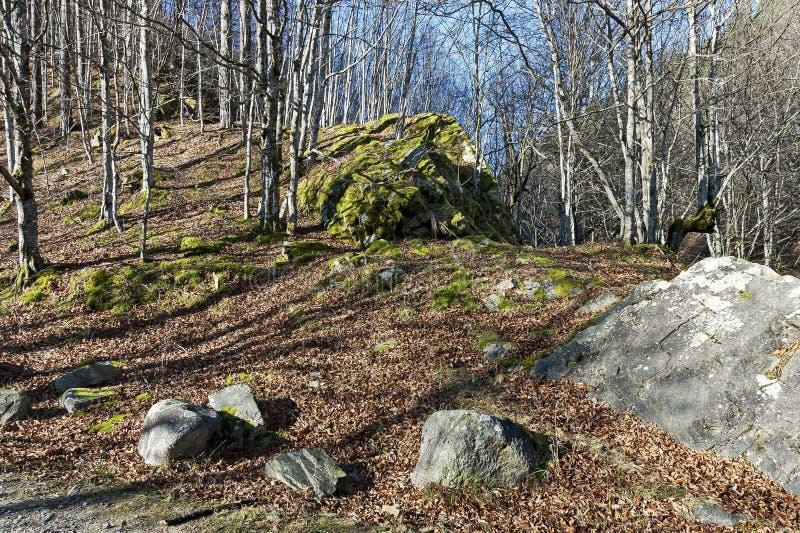 Halny deciduous las z dużymi kamieniami przerastającymi z mech, Bałkańskie góry, blisko Teteven zdjęcie stock