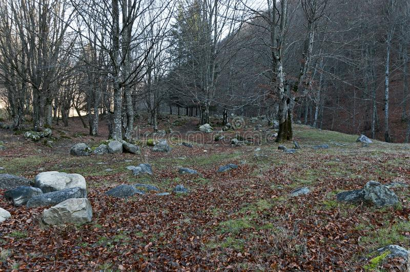 Halny deciduous las z dużymi kamieniami przerastającymi z mech, Bałkańskie góry, blisko Teteven zdjęcia royalty free
