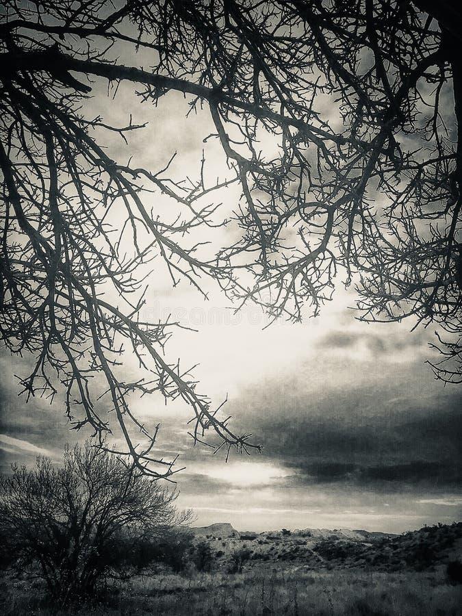 Halny drzewo zdjęcia royalty free