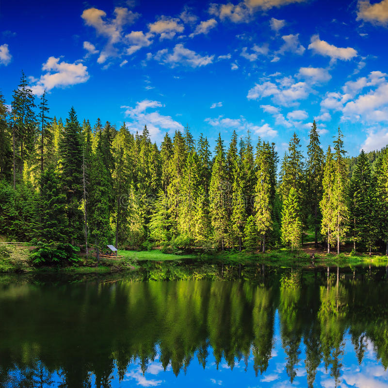Halny jezioro w iglastym lesie zdjęcia stock