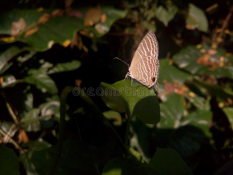 Halny motyl zdjęcia royalty free