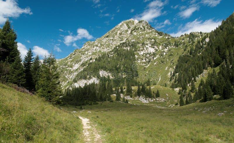 Halny paśnik w planina Duplje blisko Krnsko jezero jeziora w Juliańskich Alps obraz royalty free