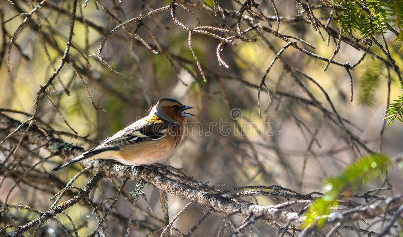 Halny ptak zdjęcia stock