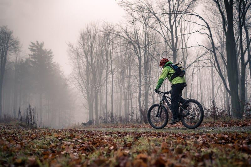 Halny rowerzysta na cyklu śladzie w drewnach obraz stock