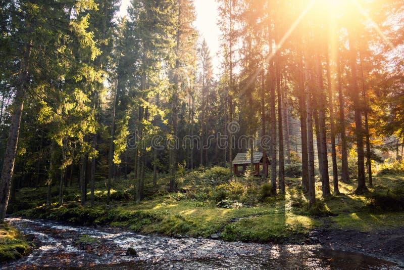 Halny rzeczny spływanie przez zielonego lasowego Świeżego wiosny th fotografia royalty free