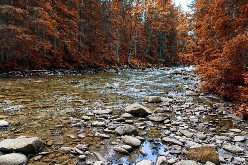 Halny rzeczny spływanie przez zielonego lasu zdjęcia royalty free