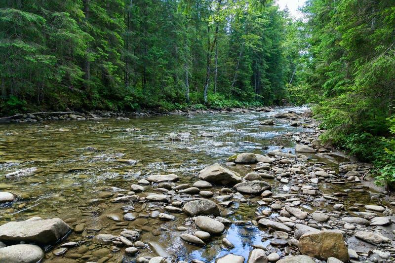 Halny rzeczny spływanie przez zielonego lasu zdjęcie royalty free