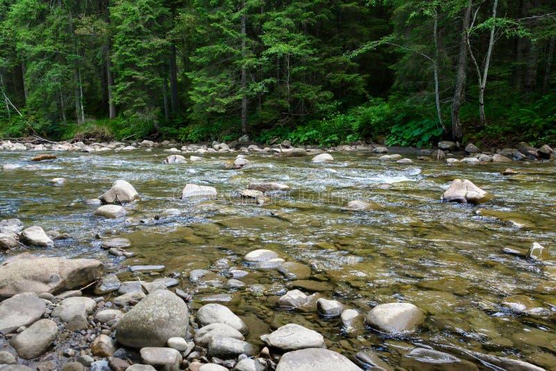 Halny rzeczny spływanie przez zielonego lasu obrazy royalty free