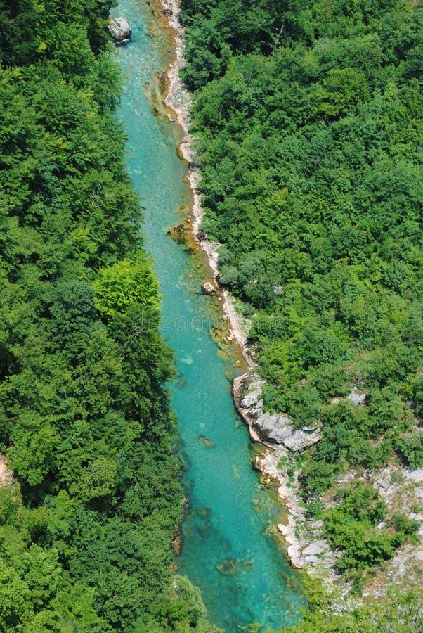 Halny rzeczny Tara i zielony las w Montenegro fotografia stock