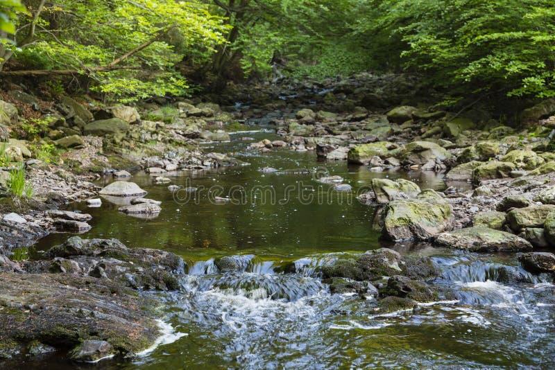 Halny strumień przez zielonego lasu zdjęcie royalty free