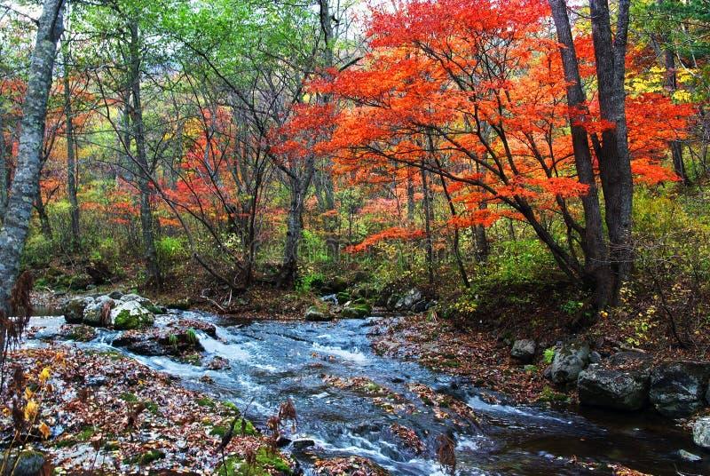 Halny strumień w spadku lesie fotografia royalty free