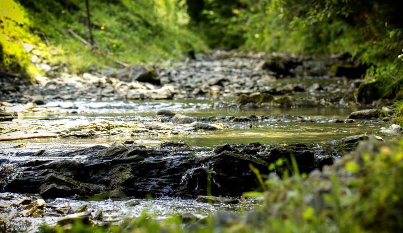 Halny strumień z kamienistymi dolnymi i zielonymi brzeg w Ukraińskich Carpathians zdjęcie stock