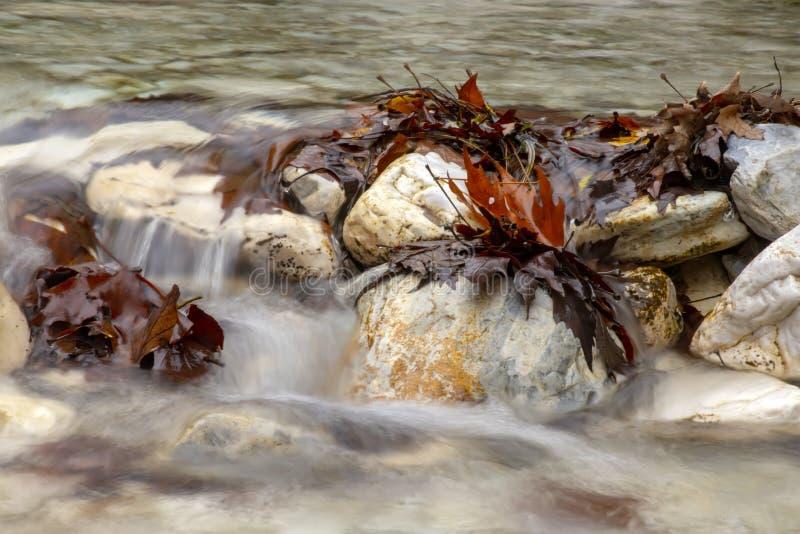 Halny strumienia spływanie między kamieniami i witający z brąz jesieni liśćmi obraz royalty free