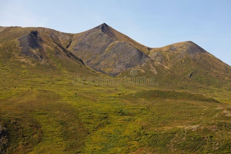 Halny tundrowy muśnięcia Yukon terytorium Kanada obrazy royalty free