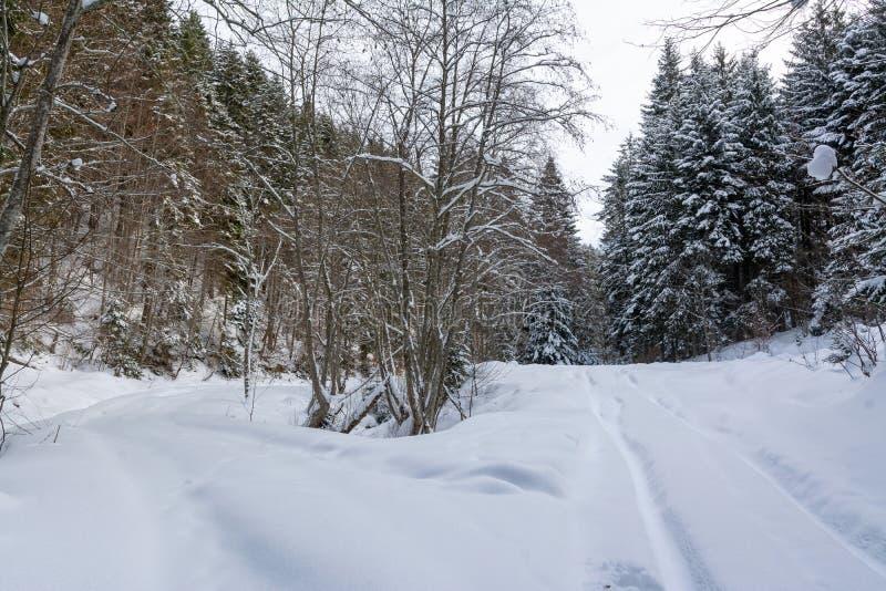 Halny zima krajobraz z mieszanym lasem fotografia stock