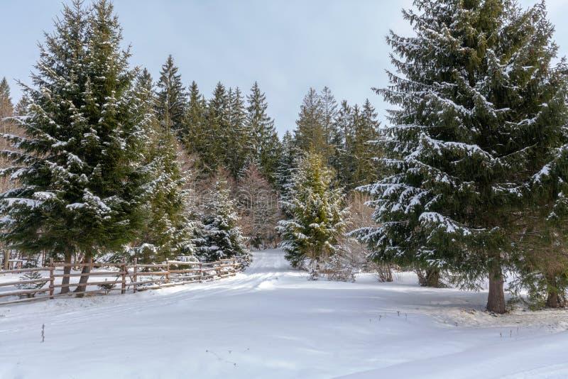 Halny zima krajobraz obraz stock