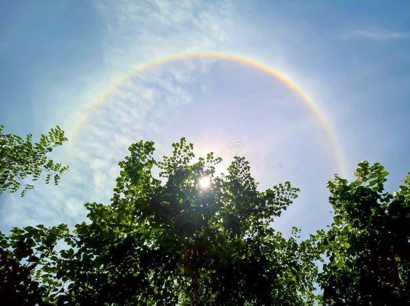 Halo de Sun, halo solaire derri?re l'arbre photos stock