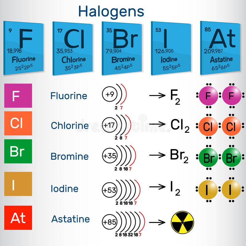 download halogens chemical elements of periodic table stock vector illustration of graphic info - Periodic Table Halogens