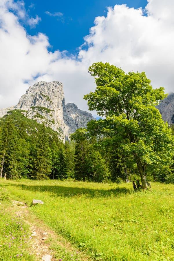 Halte d'Ellmauer aux montagnes de Wilder Kaiser de l'Autriche - pr?s de Gruttenhuette, une hutte alpine, allant, Tyrol, Autriche  photographie stock libre de droits