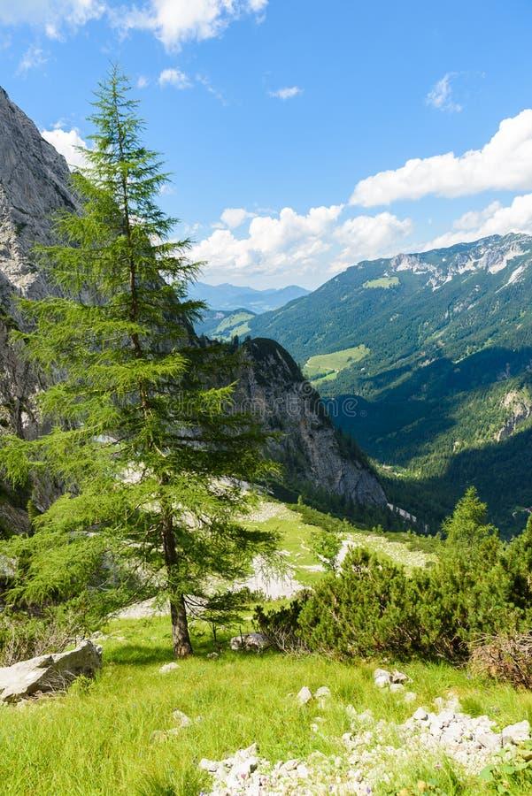 Halte d'Ellmauer aux montagnes de Wilder Kaiser de l'Autriche - pr?s de Gruttenhuette, une hutte alpine, allant, Tyrol, Autriche  images stock