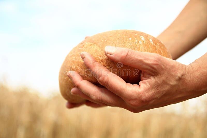 Halten eines frischen Brotlaibs stockbilder